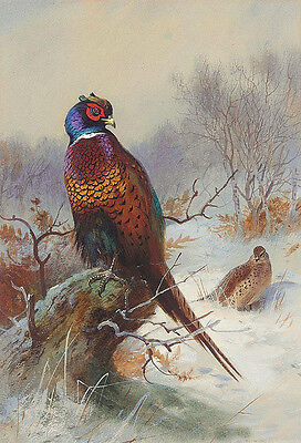 No framed Oil painting nice birds in winter landscape handpainted canvas