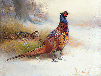 Large oil painting Walking bird in landscape no framed free shipping canvas