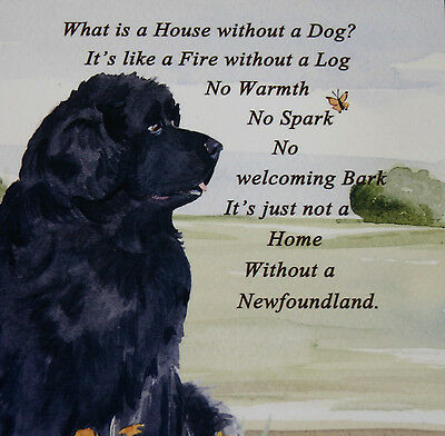 Newfoundland Dog Hardboard Plaque Tile Watercolour Print Sandra Coen Artist