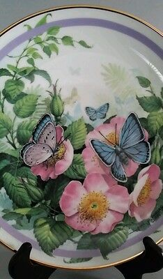 Common Blue Butterfly Garden Plate Collection by Paul J. Sweany