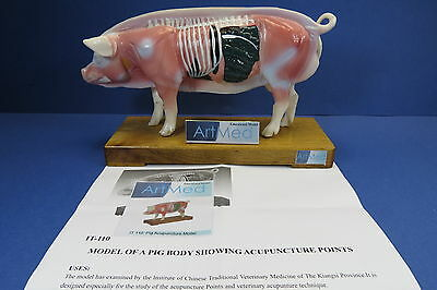 Model Anatomy Professional Medical Veterinary Acupuncture Pig Body IT-110 ARTMED