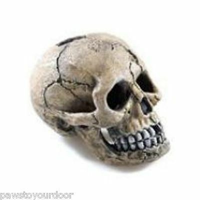 Aquarium Fish Tank Human Skull Ornament Large or Small Cave Decoration Classic