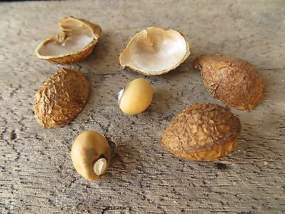 10 Groundnut ,(Vigna subterranea) seeds, Heirloom,EXTREMELY RARE,From Africa
