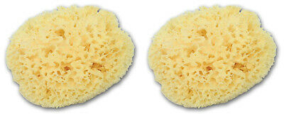 Set of 2 Large Natural Adult Bath Formed Greek Silk Sea Sponges 6.5''- 7''