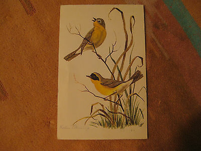 Yellow Throuts Birds by Helen Fleming Sighed Art Used Vintage Postcard