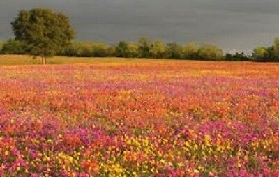 100% Pure Meadow wild flower seeds Bee Butterfly 57 species 10g to 20kg MIX 22