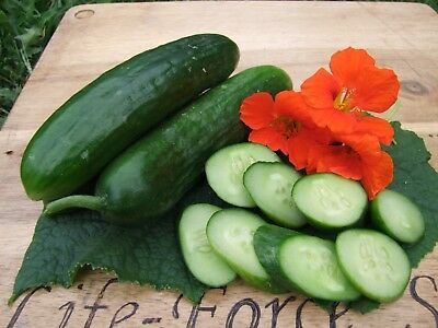 Cucumber Lebanese (50 seeds) Organic Heirloom from Life-Force Seeds