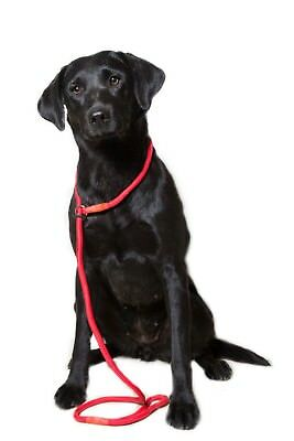 Dog & Field Super Soft Braid Nylon Slip Lead - Beautiful Dog Lead for all Breeds
