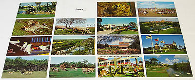 1950's 1960's 1970's FLORIDA ATTRACTIONS Amusement Parks Postcards, 80 Postcards