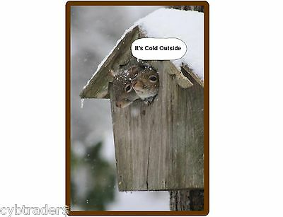 Funny Squirrels In Bird House Cold Outside  Refrigerator / Tool Box Magnet Ad