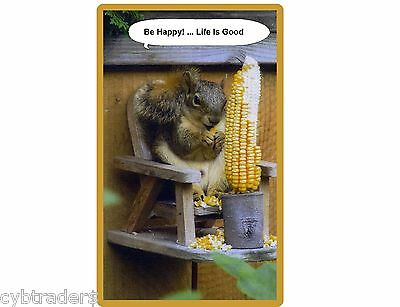 Funny Squirrel On Feeder Chair  Refrigerator / Tool Box Magnet Ad
