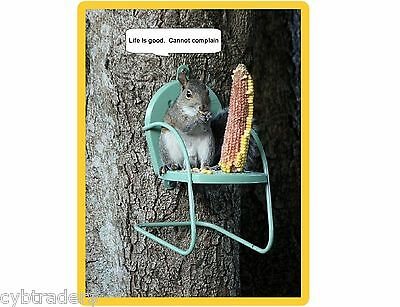 Funny Squirrel Life Is Good  Refrigerator / Tool Box / Magnet