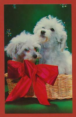 pair of dogs in a basket - dog postcard