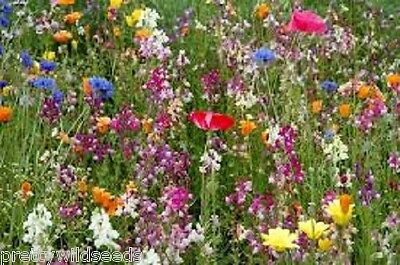 Pure wild flower seeds Dry Sandy Soil  perennial 20g to 5Kg mix 10 meadow