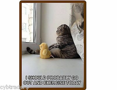 Funny Outside Cat Refrigerator / Tool Box / File Cabinet Magnet