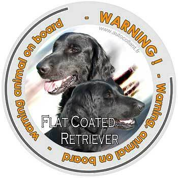 Circular Dogs sticker attention Flat-Coated Retriever on board