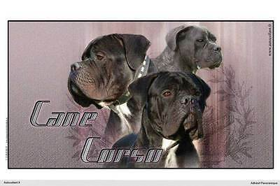 Dogs  sticker 15 cm to 100 cm wide Cane Corso