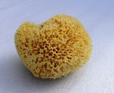 SEA SPONGE EXTRA SOFT  IDEAL FOR BABY  5'' = 13cm GREEK KALYMNOS