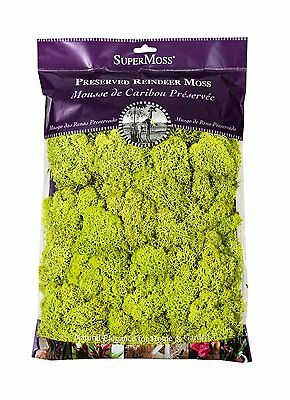 SuperMoss (21669) Reindeer Moss Preserved, Chartreuse, 8oz , New, Free Shipping