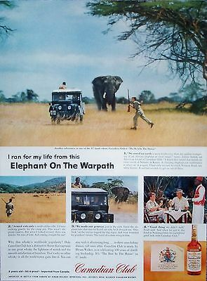 1958 Canadian Club Whisky African Elephant Charge Julian Sutton Safari Kenya ad