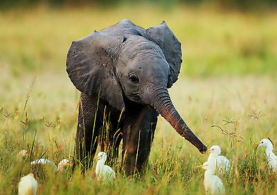 Elephant And Ducklings Wall Art Poster (A1 - A5 Sizes)