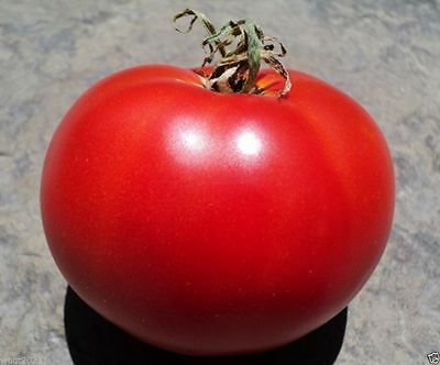 """HEIRLOOM TOMATO """"Super Sioux """"  (50 Seeds) Great For Sandwiches, salads,Slicing"""