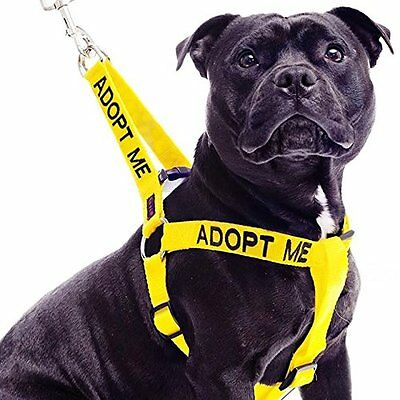 Color Coded Dog Strap Harness ADOPT ME Yellow Helpful Non Pull Large L-XL Nylon