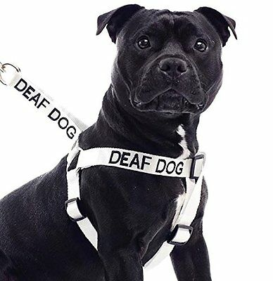 Strap Harness DEAF DOG Color Coded Non Pull Embroidered Safe Easy Pet walk Nylon