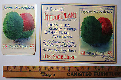 SUPER  Burt's Seed Co  LG  SIGN / Label  & Seed Packet Hedge Plant ca 1915