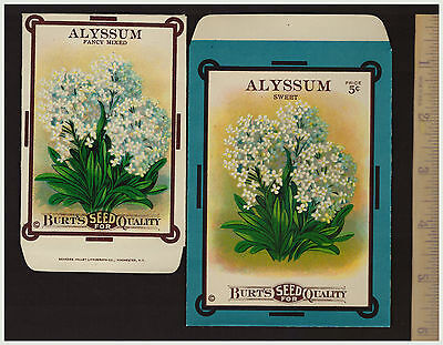 SUPER Lot of 2 - Burt's ALYSSUM Seed Packet Envelopes Lithographs 1910s