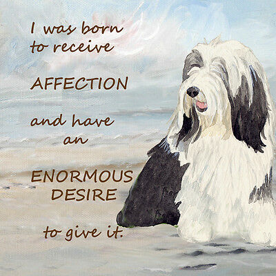 BEARDED COLLIE DOG new glossy hardboard plaque tile Sandra Coen artist print