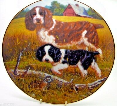 ~ Springer Spaniels ~ A Sporting Generation ~ Hamilton Collection Plate