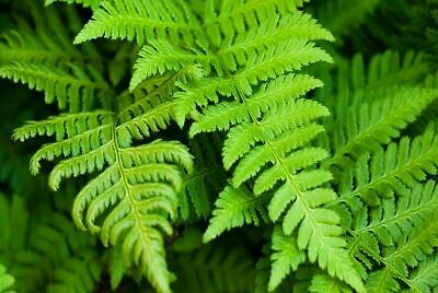 Compost For Growing Hardy Ferns & Ornamental Grasses In Containers & Pots