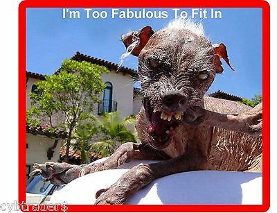 Funny Ugly Dog Refrigerator / Tool Box  Magnet Gift Card Insert