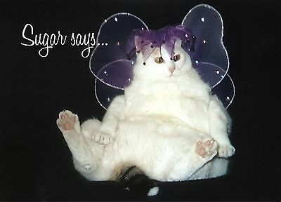 SUGAR Says FAT CAT Super MODEL INSPIRATIONAL BIRTHDAY Greeting Card Angel