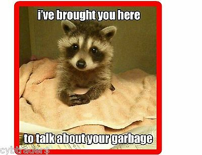 Funny Raccoon Garbage Lecture   Refrigerator / Tool Box Magnet  Gift Card Insert