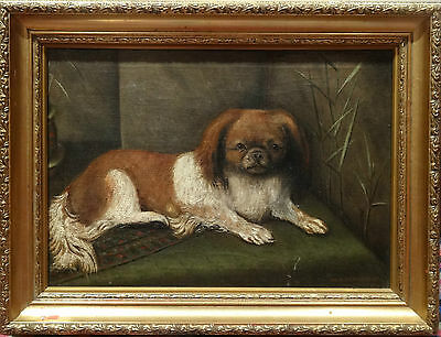 FINE Early 1900's CENTURY ENGISH SCHOOL PORTRAIT OF A DOG ANTIQUE OIL PAINTING