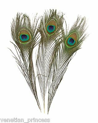 """Genuine Natural Peacock Feathers USA SELLER Beautiful """"EYES"""" FREE SHIPPING"""