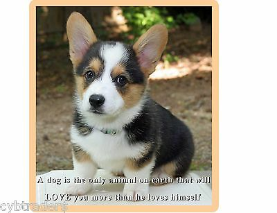 Cute Welsh Corgi Puppy / Dog Refrigerator  / Tool Box Magnet / Gift Card Insert