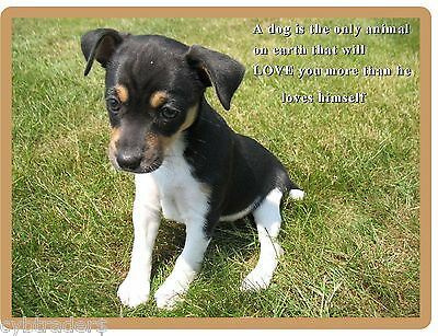 Cute Rat Terrier  Puppy / Dog Refrigerator  / Tool Box Magnet / Gift Card Insert