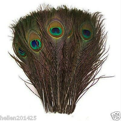 New Lot 50 pcs Natural Real Peacock Tail Feathers 10-12 Inches for Home Decor