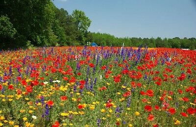 WILD FLOWER SEEDS MEADOW BUMBLE BEE BUTTERFLY 50/50 mix allrounder 10g to 20kg