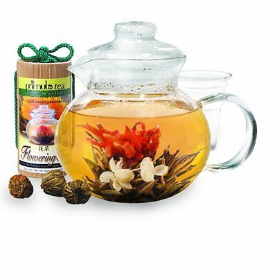 Primula 40-Ounce Glass Teapot with Infuser and Lid with 12 Flowering Teas in a C