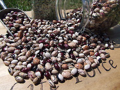 Bean, Heirloom Dried Bean Mix (45seeds)- Organic from Life-Force Seeds