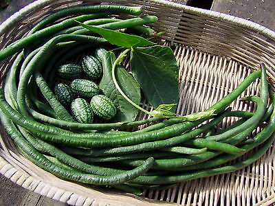 Climbing Snake Bean Red Dragon  (40 seeds)- Heirloom from Life-Force Seeds