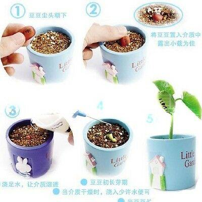 20x Chic Mini Garden Outdoor Magic Bean Seeds Gift Plant Growing Message Word -N