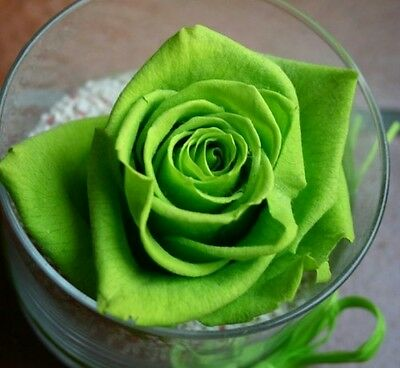 Heirloom 100 Seeds Green Roses Bush Rose Garden Double Flower Bulk Perennial