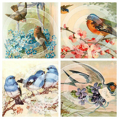 4 x Vintage Birds Postcard Image Reproduction Prints 3 x 5 Inches 09101112