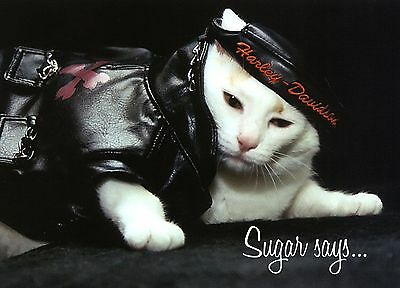 SUGAR Says FAT CAT FELINE MODEL, INSPIRATIONAL BIRTHDAY Greeting Card BIKER