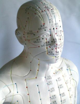 """22"""" human Chinese acupuncture model New"""